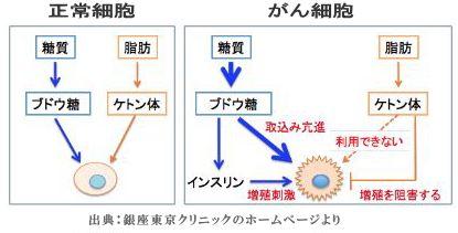 正常細胞とがん細胞の栄養源を示す図.jpg