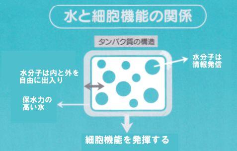 水と細胞機能の関係