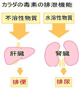 カラダの毒素の排泄機能